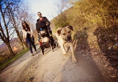 young-family-with-pram-and-dog
